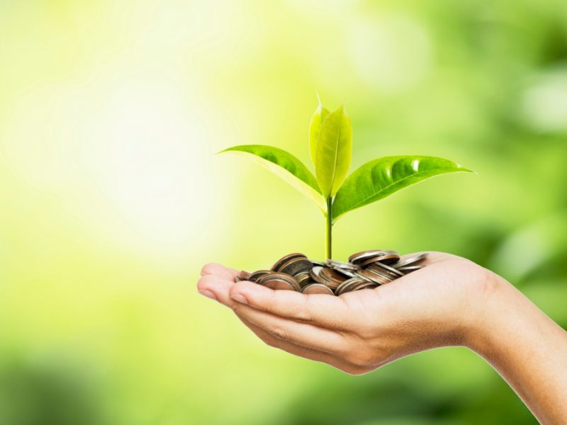 man-hand-holding-coins-and-tree-look-like-as-planting-on-greenery-picture-id1213877364